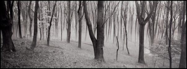medium_20102012155614335_Trees