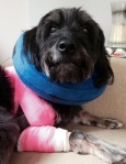 Injured Lucy